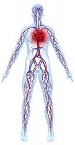 Herzinfarkt Symptome - Homocysteinspiegel